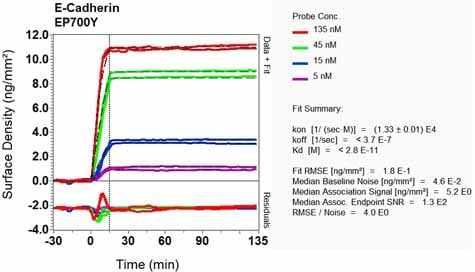 OI-RD Scanning - Anti-E Cadherin antibody [EP700Y] - Intercellular Junction Marker (ab40772)