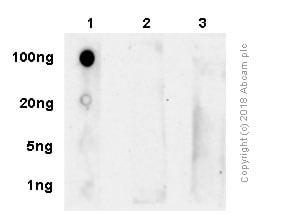 Dot Blot - Anti-RNA polymerase II CTD repeat YSPTSPS (phospho S5) antibody [4H8] - ChIP Grade (ab5408)