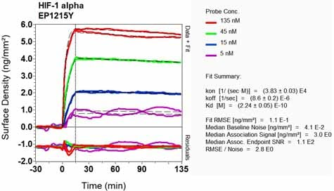 Other - Anti-HIF-1 alpha antibody [EP1215Y] (ab51608)