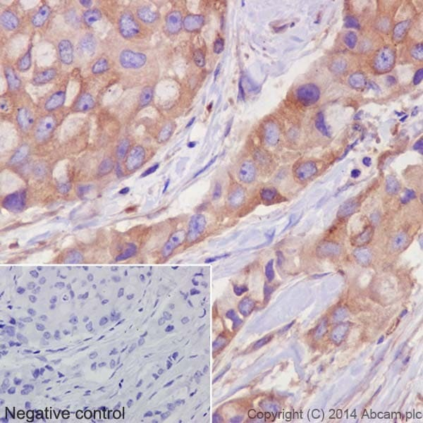 Immunohistochemistry (Formalin/PFA-fixed paraffin-embedded sections) - Anti-alpha Tubulin antibody [EP1332Y] - Microtubule Marker (ab52866)