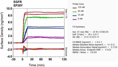 OI-RD Scanning - Anti-EGFR antibody [EP38Y] (ab52894)