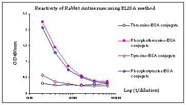 ELISA - Anti-Phosphothreonine antibody (ab6187)
