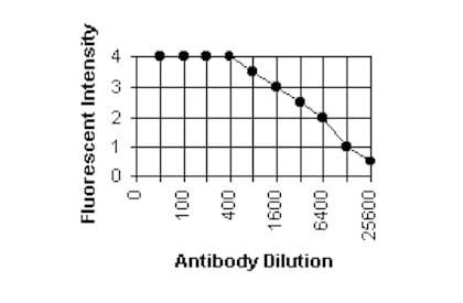 Immunocytochemistry/ Immunofluorescence - Anti-Cytomegalovirus Glycoprotein B antibody [2F12] (ab6499)