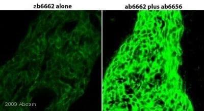 Immunohistochemistry (Frozen sections) - HRP Anti-Fluorescein antibody (ab6656)