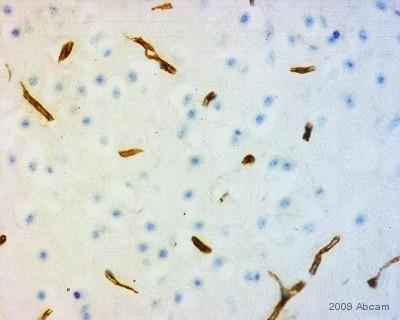 Immunohistochemistry (Frozen sections) - Rabbit Anti-Rat IgG H&L (Biotin) (ab6733)