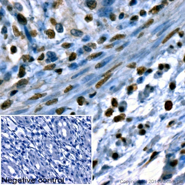 Immunohistochemistry (Formalin/PFA-fixed paraffin-embedded sections) - Donkey Anti-Sheep IgG H&L (HRP) (ab6900)
