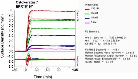 Other - Anti-Cytokeratin 7 antibody [EPR1619Y] - Cytoskeleton Marker (ab68459)