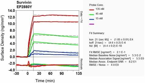 Other - Anti-Survivin antibody [EP2880Y] (ab76424)