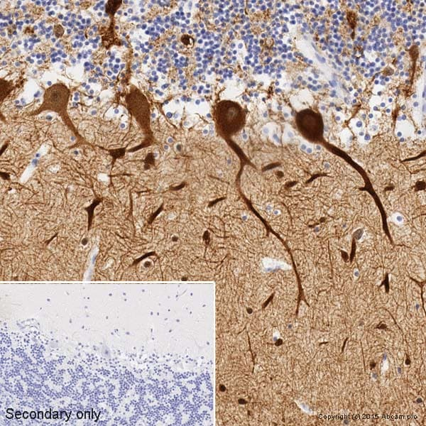 Immunohistochemistry (Formalin/PFA-fixed paraffin-embedded sections) - Anti-beta III Tubulin antibody [2G10] - Neuronal Marker (ab78078)