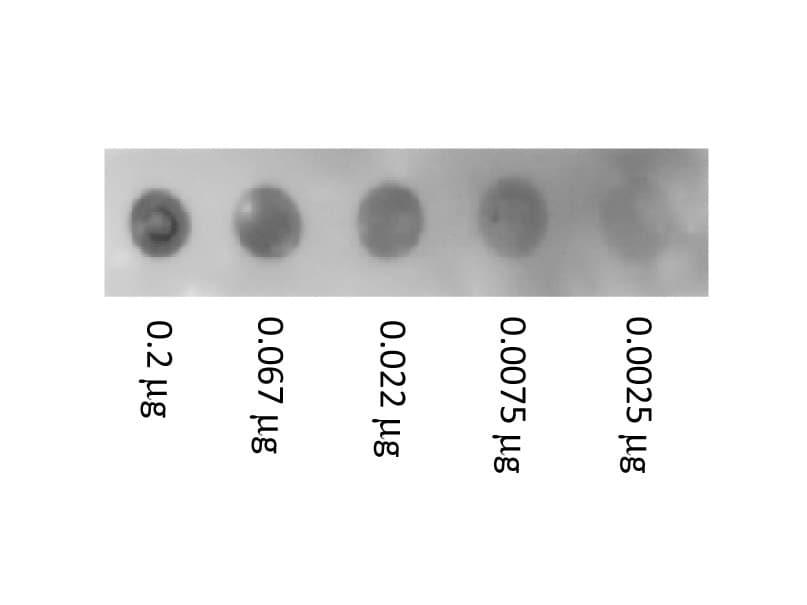 Dot Blot - Native Human Serum Albumin protein (Biotin) (ab8033)