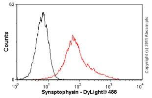 Flow Cytometry - Anti-Synaptophysin antibody [SY38] (ab8049)