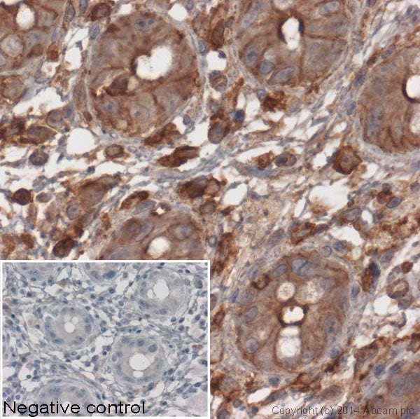 Immunohistochemistry (Formalin/PFA-fixed paraffin-embedded sections) - Anti-beta Actin antibody [mAbcam 8224] - Loading Control (ab8224)