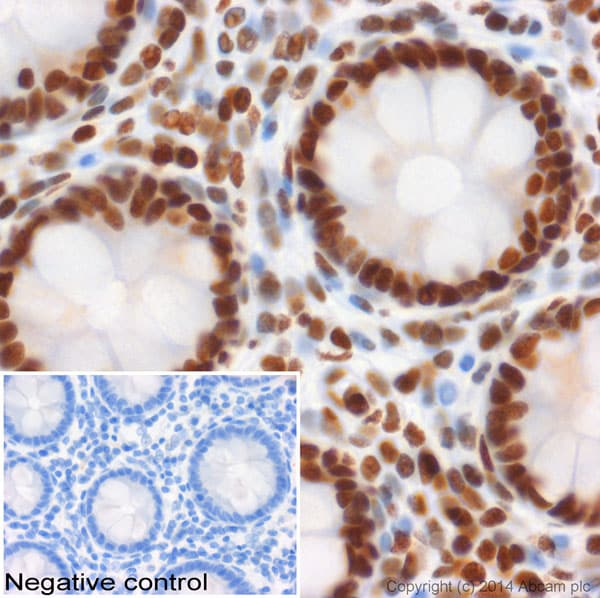 Immunohistochemistry (Formalin/PFA-fixed paraffin-embedded sections) - Anti-Histone H3 (mono methyl K4) antibody - ChIP Grade (ab8895)