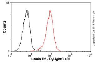 Flow Cytometry - Anti-Lamin B2 antibody [LN43] (ab8983)