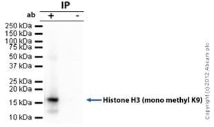 Immunoprecipitation - Anti-Histone H3 (mono methyl K9) antibody - ChIP Grade (ab9045)