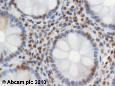 Immunohistochemistry (Formalin/PFA-fixed paraffin-embedded sections) - Anti-SMC3 antibody (ab9263)