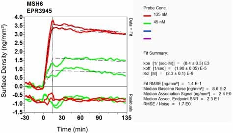 OI-RD Scanning - Anti-MSH6 antibody [EPR3945] (ab92471)