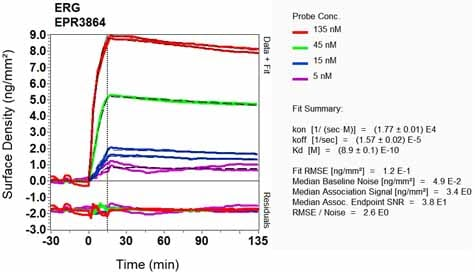 OI-RD Scanning - Anti-ERG antibody [EPR3864] (ab92513)