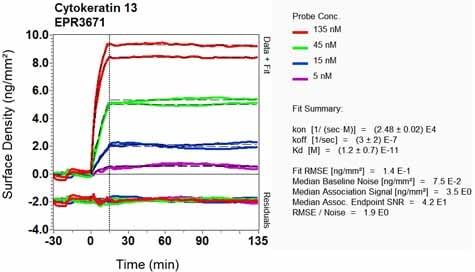 OI-RD Scanning - Anti-Cytokeratin 13 antibody [EPR3671] (ab92551)