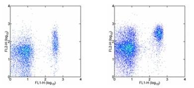 Flow Cytometry - PE Anti-CCR7 antibody [4B12] (ab95669)