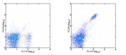 Flow Cytometry - PE Anti-CD8 beta antibody [H35-17.2] (ab95772)