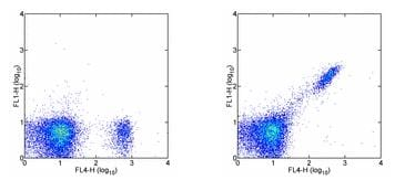 Flow Cytometry - FITC Anti-CD8 beta antibody [H35-17.2] (ab95773)