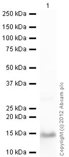 Western blot - Recombinant Human S100A9 protein (ab95909)
