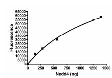 Functional Studies - Recombinant human NEDD4 protein (ab95927)