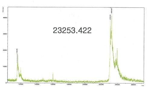 Mass Spectrometry - Recombinant Human KRAS protein (ab96817)