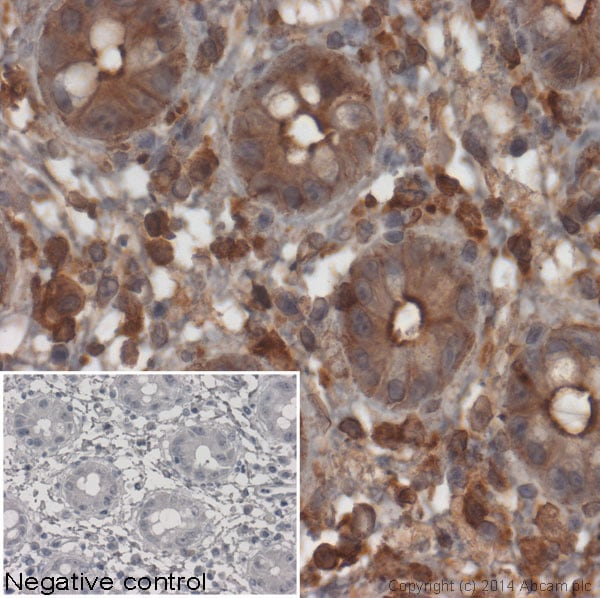 Immunohistochemistry (Formalin/PFA-fixed paraffin-embedded sections) - Goat Anti-Mouse IgG H&L (HRP) (ab97023)